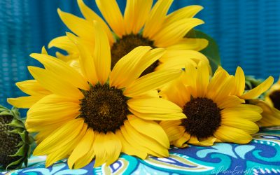 The Joy of Yellow Sunflowers