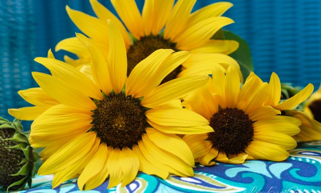 The Joy of Yellow Sunflowers